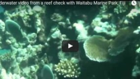 Underwater video from a reef check with Waitabu Marine Park, Fiji