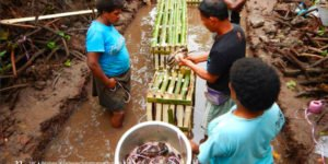 Waitabu Women fishers launch a mud crabs management plan for their fishery
